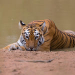 Wildlife of Tadoba | A Photographic Journey